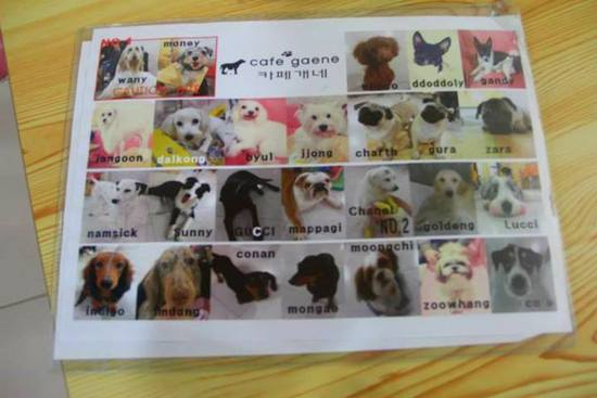 Daftar 'member' di dog cafe seoul (pic from google)