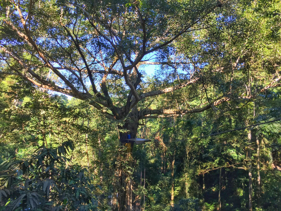 Lokasi Flight of the Gibbon Chiang Mai