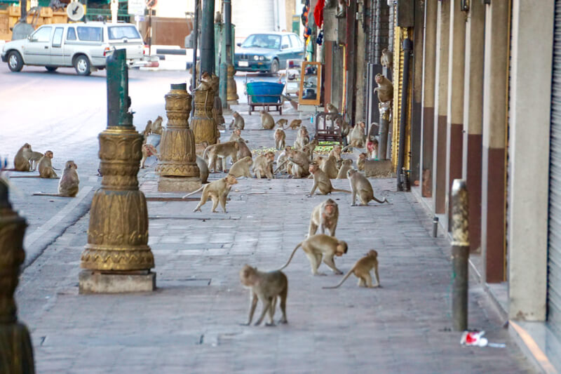 Monkey Zone di Lopburi