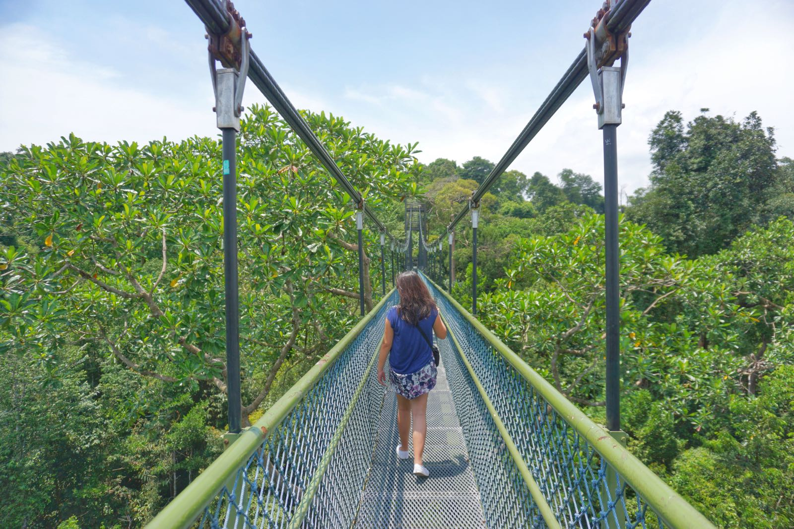 Jembatan Gantung Tree Top Walk Singapore 1