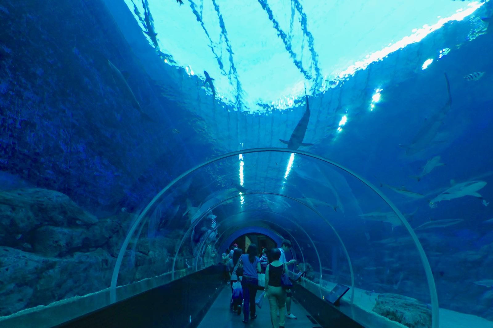 Terowongan Di Sea Aquarium