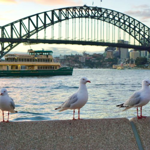 Traveloka Xperience Sydney
